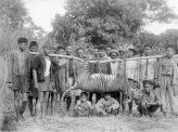 虎・象、インドネシアで野生動物殺害